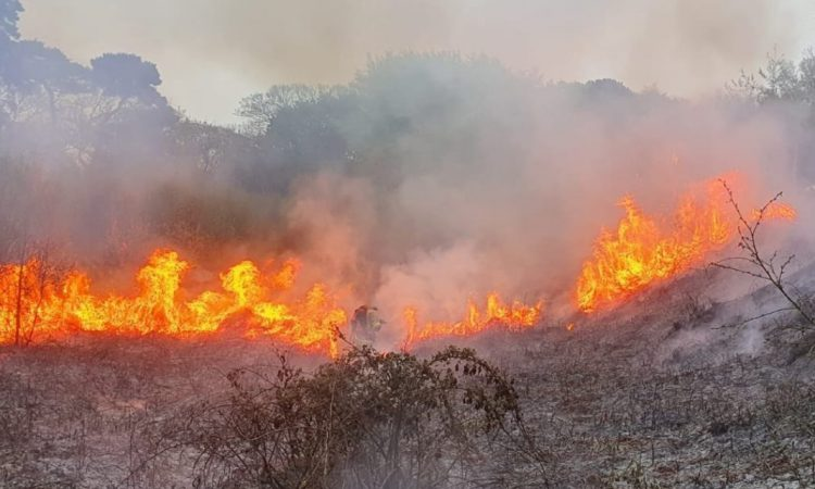 Fire brigade tests backpack sprayers on gorse wildfire