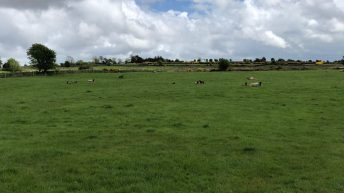 Sheep management: How can I improve grass utilisation on my farm?