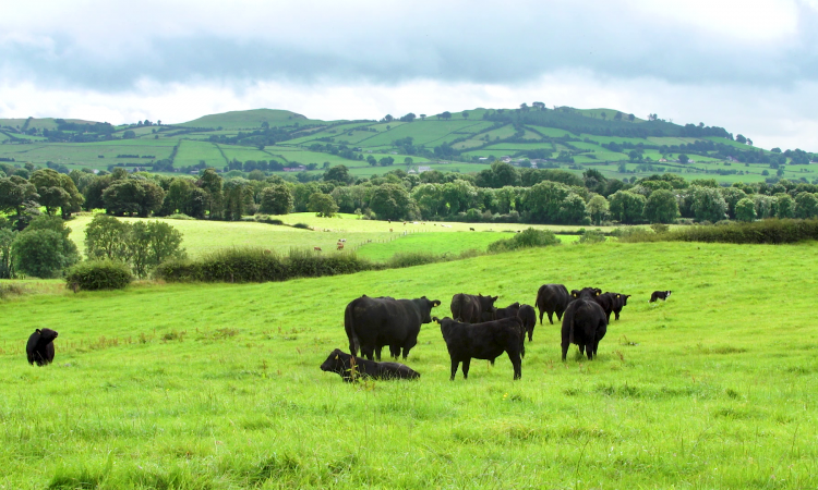 Aberdeen Angus beef set to retain a premium in the market