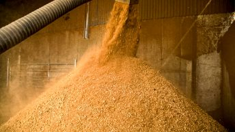 Gain Equine says contaminated molasses source of banned substance