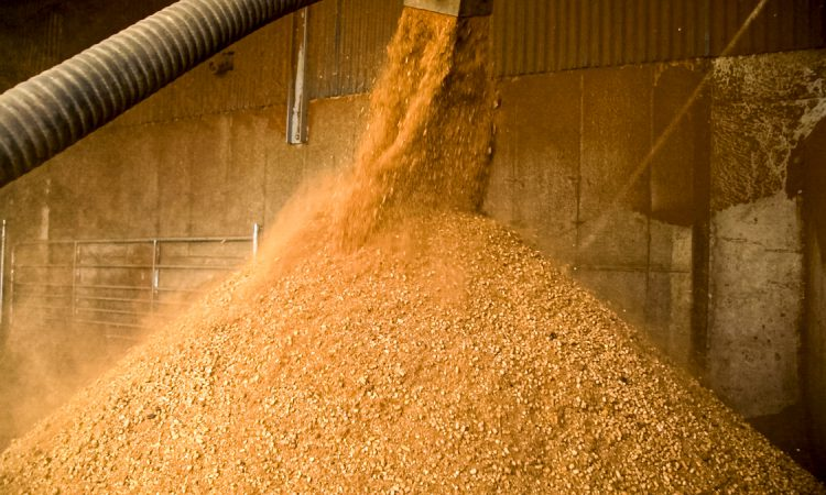 Ag committee must debate tariffs for feed and grain – Nolan