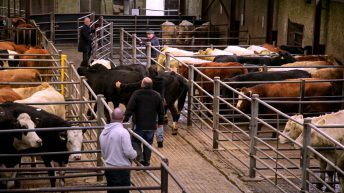Beef Finishers Payment details 'straightforward and inclusive'