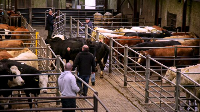 What county has the most cattle marts in Ireland?