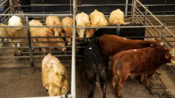 Beef trade: Negotiating power continues to lie with the farmer
