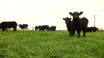 Where do the TB herd risk letters leave new entrant farmers?
