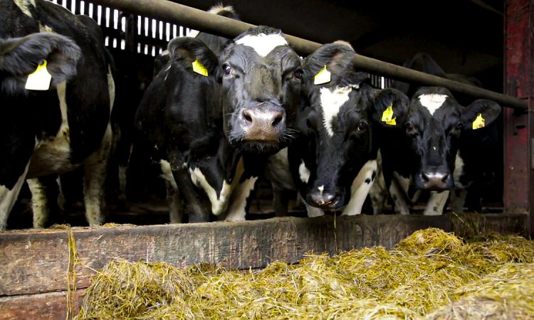 Stricter nitrates regulations for heavily stocked farms kick in