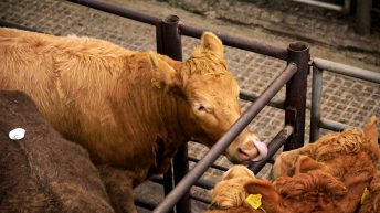 Potential BEAM clawback of €40 million from beef farmers 'immoral'