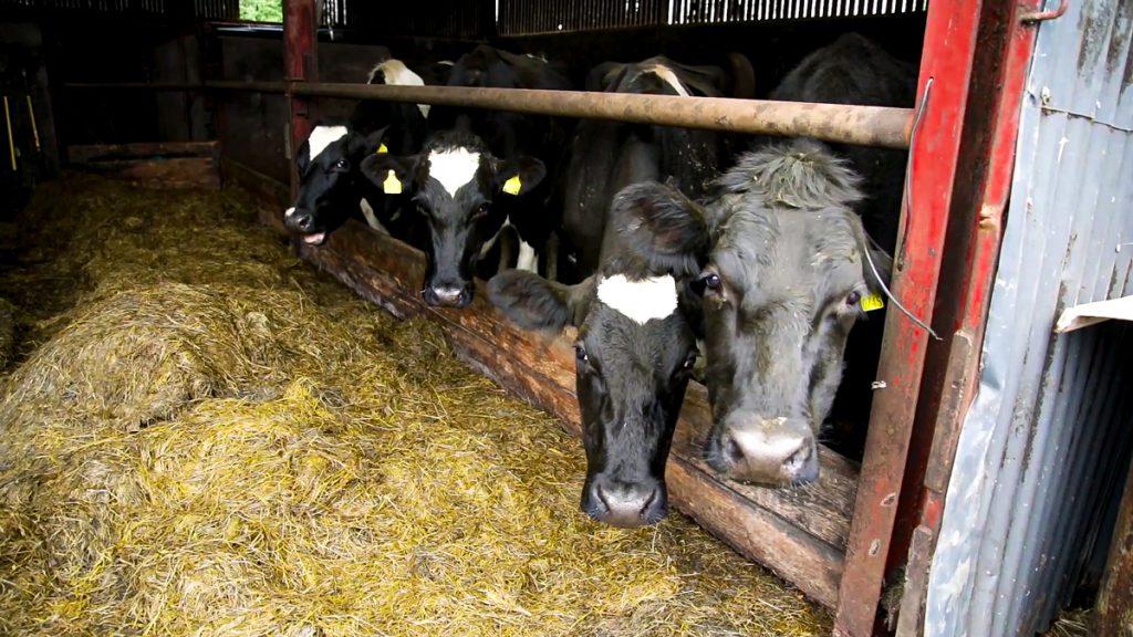 Liquid milk production nitrates regulations