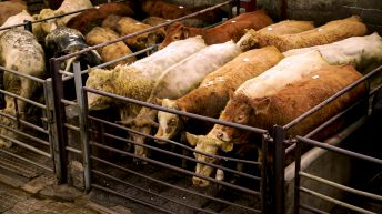 Letter to the editor: The CCPC should look at 'all of the evidence' in the beef industry