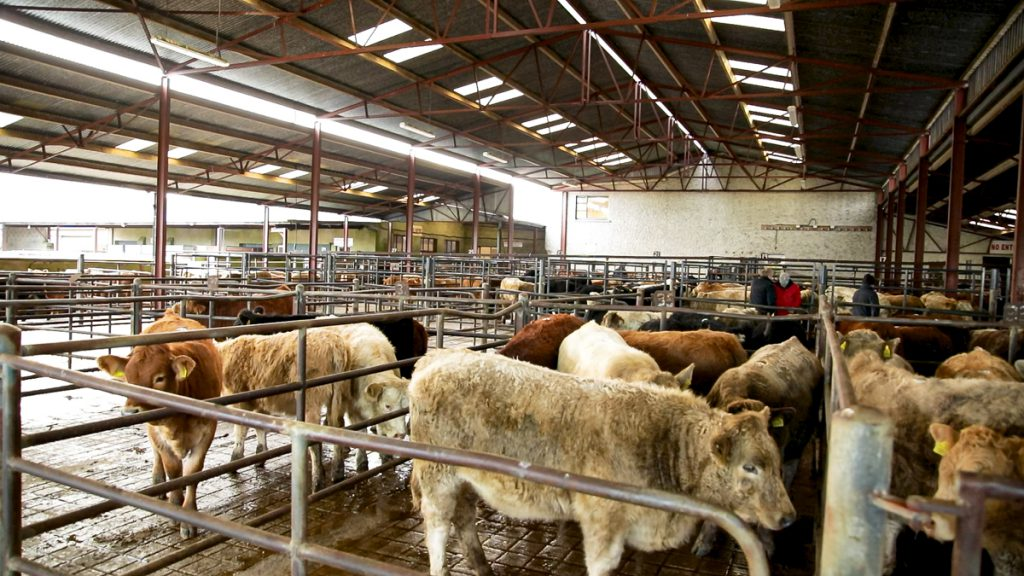 New managerial appointment at Golden Vale Marts