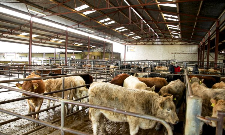 Marts and attendees warned to stick to Covid-19 procedures