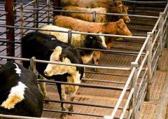 Online-only system for marts 'is too ambitious'