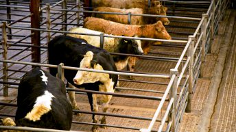 Preparing for Level 4 restrictions at Raphoe Mart