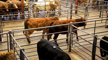 Mart managers and breed societies stress 'unworkable' UK trade concern to minister