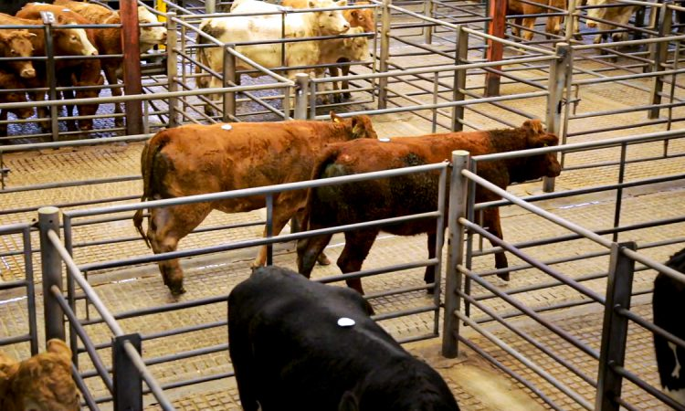 2 marts had operating licences suspended due to Covid-19 breaches
