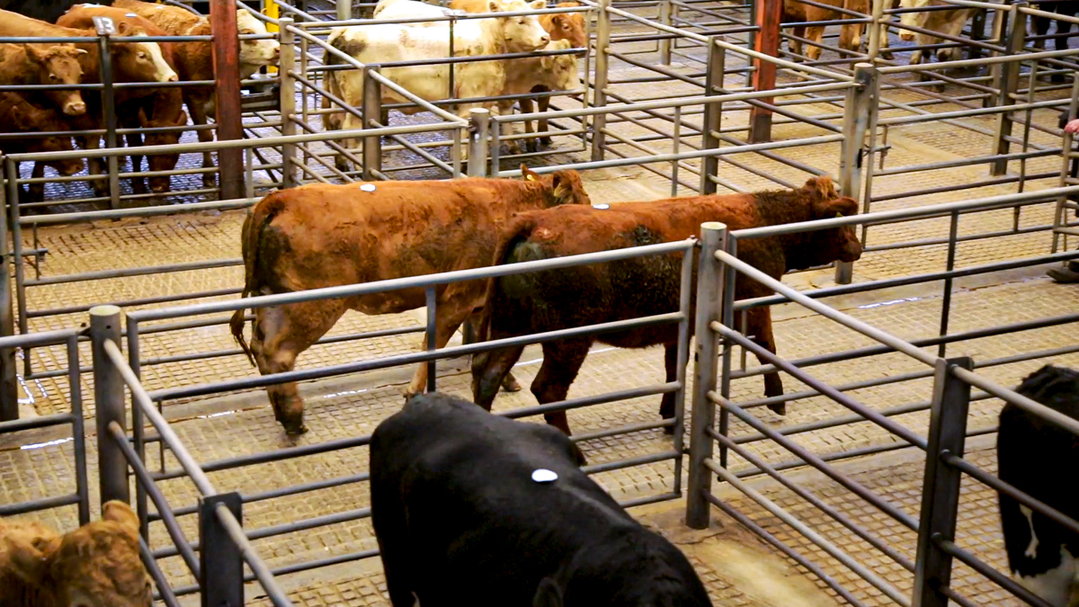 Kilkenny Mart to resume sales from Monday morning