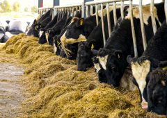 Reaction: What do these farmers think of the €100/head Beef Finishers Payment?