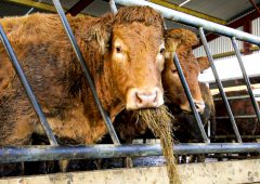 Make sure your cattle are 'vaccine ready' this winter…