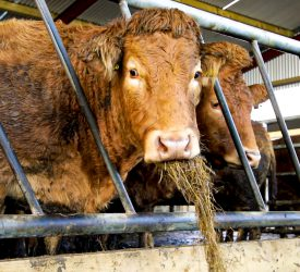 Beef farmers 'have more to be unhappy about now than 2019'