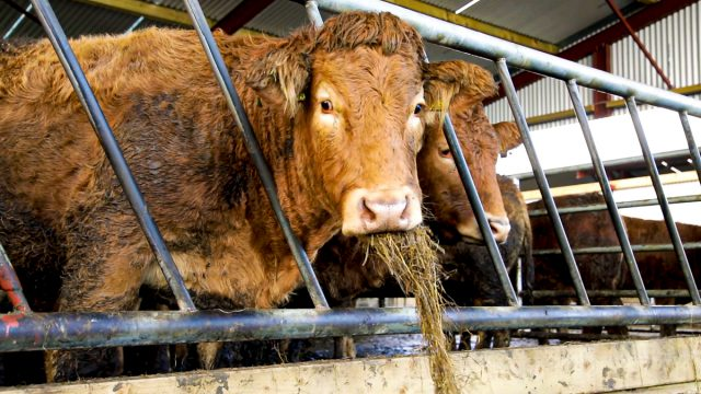 BEAM: 'Associated herd' farmers left in 'impossible situation'