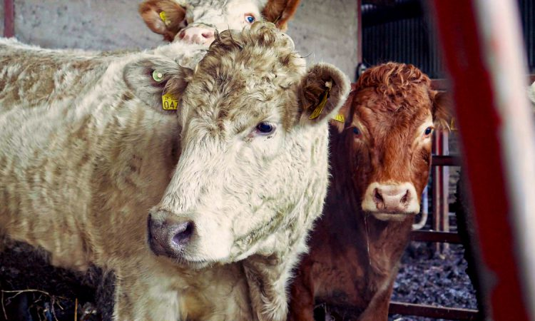 What factors affected the performance of sheepmeat, beef and live exports in 2020?