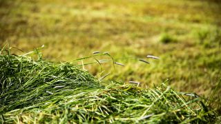 FCI calls for calm amid  'frenzy' to catch up on first-cut silage