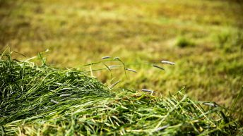 GrowthWatch: Grass growth exceeding demand scenario welcomed