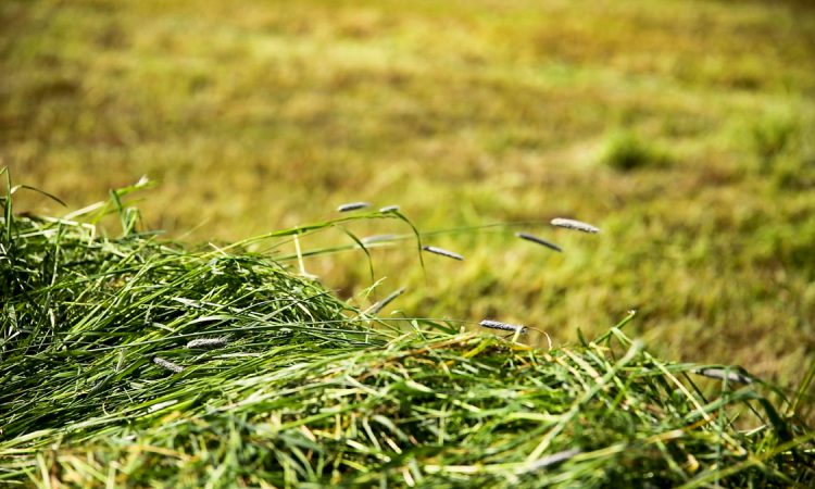 GrowthWatch: Grass expansion surpassing direct unfolding welcomed