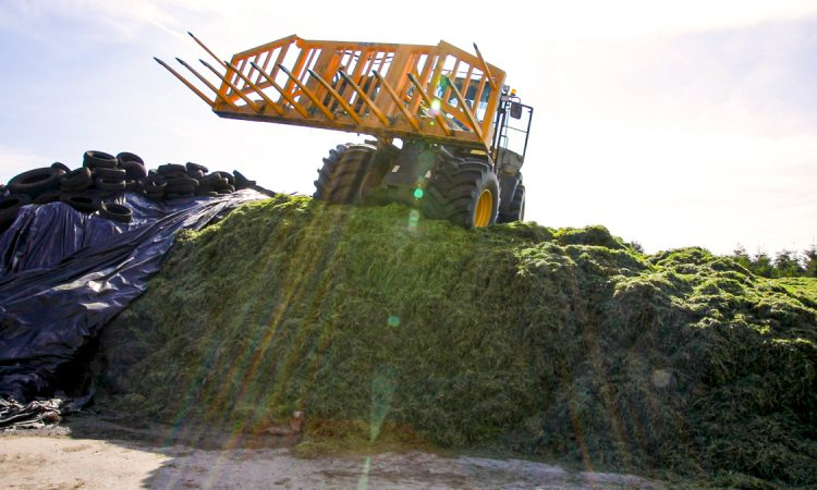 GrowthWatch: Focus switches to second-cut silage and surpluses