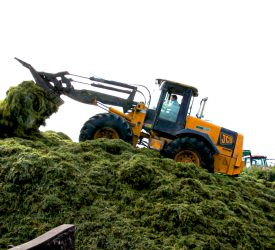 Fodder planning: Have you enough silage for this winter?