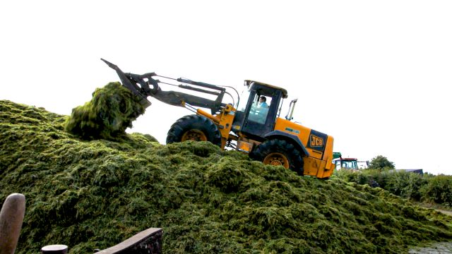Top tips for making high-quality silage this season amid poor growth