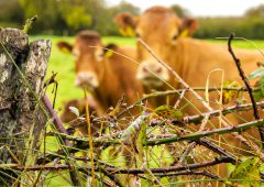 'Grace period' for BDGP deadlines needed after mart disruption – IFA