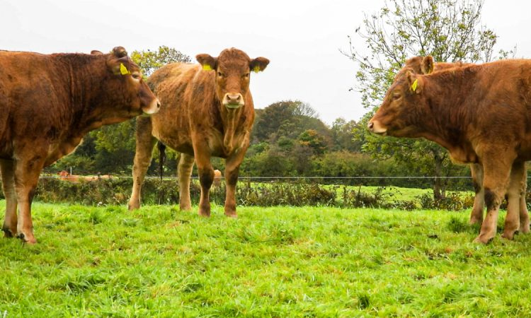 Culling our cattle 'good for climate maths…but not our planet'