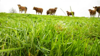 Slight changes made to 'Grass-Fed Beef' PGI application