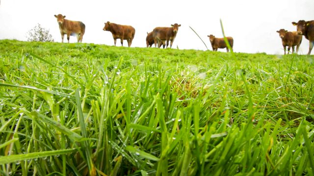 Agri-Food Strategy: Plans for all farms to be in QA schemes