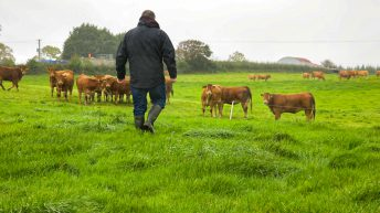 McGuinness called on to 'make a strong case for family farms' in commissioner role