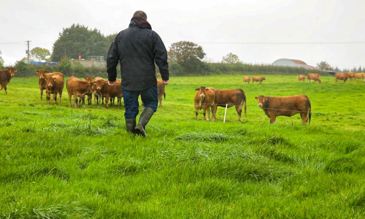 Income issue: National Farm Survey 'shows scale of task facing new Government'