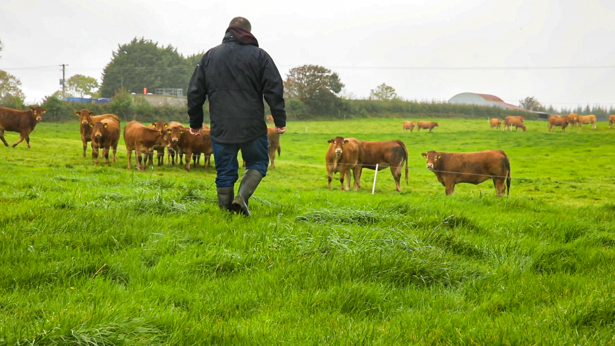 Agriculture minister to bring 3-year strategic plan for farming to cabinet