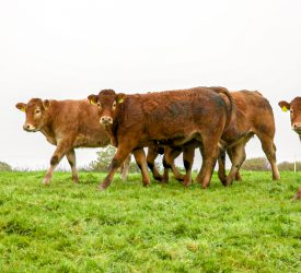 'Gap with UK' but Irish beef prices ahead of most EU states – MII