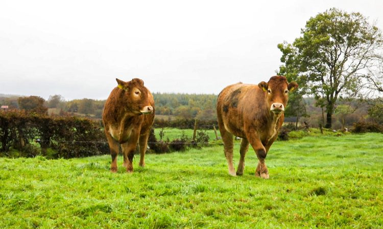 Retailer involvement in PGI beef application 'will be kept under review'