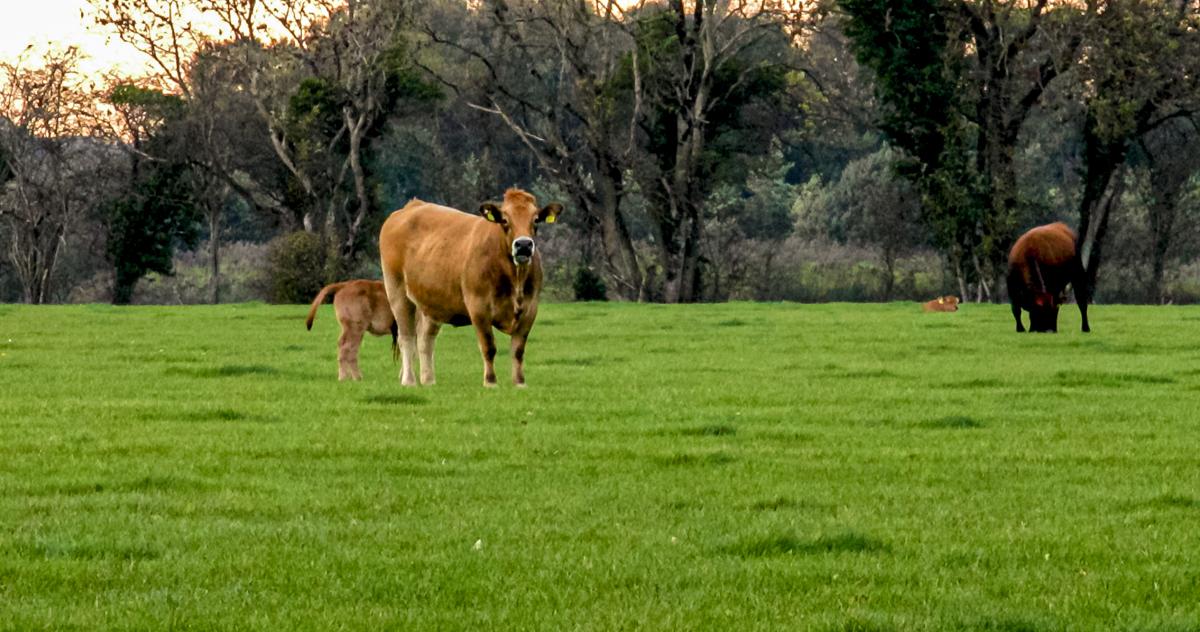 Improved spring nitrogen: Top tips from Teagasc