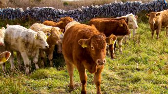 Cabinet approval announced for €50 million beef support scheme