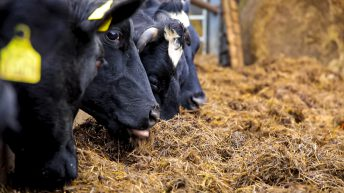 10% of Irish farms facing fodder deficits – Teagasc