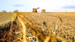 Potato prices: Retail market provides demand