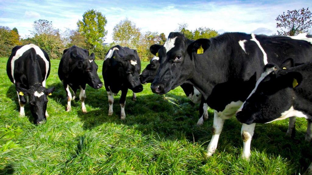 Irish emissions from manures and fertilisers 'continue to rise' – but at 'slower rate'