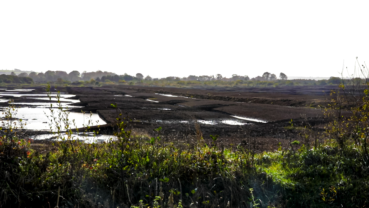 Ireland to voluntarily report impact of wetlands on greenhouse gas emissions