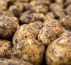 Potato blight warning extended to Connacht