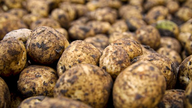 Potato celebrations put on hold for 12 months