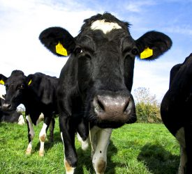 Project to make 5,000 dairy farms climate neutral awarded €2m