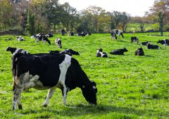 'Ireland must at least stabilise herd to benefit from Oxford science on methane' – EPA